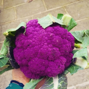 purple cauliflower image