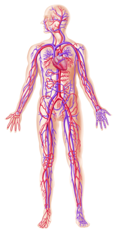 full-body-circulation
