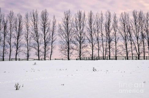 Rural-Winter-Landscape-Photo-Credit-elena-Elisseeva-
